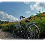 一人暮らしで自転車のおすすめはママチャリだ!体験談を話します。